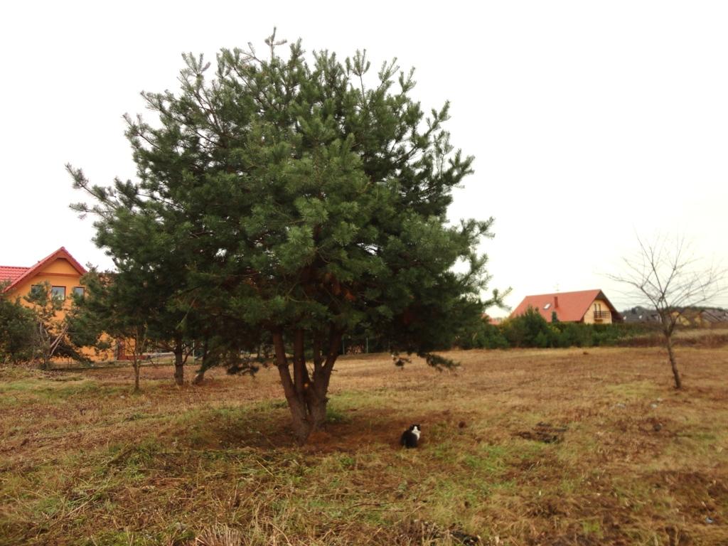 ProsperHome.pl - centrum nieruchomości: Miłoszyce